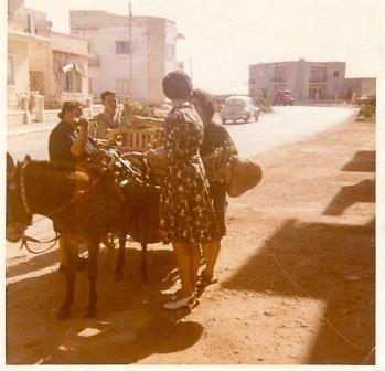 Donkey Deliveries in Malta